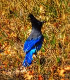 Early bird royalty free stock photos