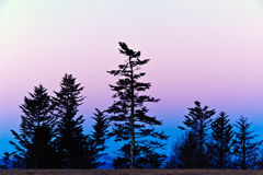 Early morning on the Blue Ridge Parkway. With pink and blue skies Royalty Free Stock Photos