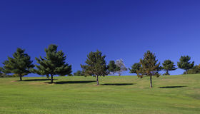 Early morning blue sky and trees Royalty Free Stock Photography
