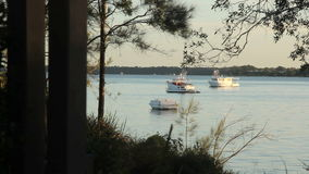 Early Morning Boats. Boats on a calm morning seen from the shore through trees at sunrise stock video footage