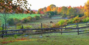 Early Morning on a Bolton Farm  - Bolton, Ma by Eric L. Johnson Photography Royalty Free Stock Image