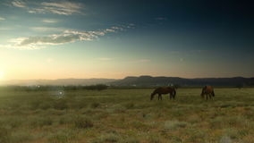 Early morning Cloudscape with feeding horses stock footage