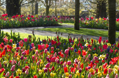 Early morning in colorful spring garden. Colorful spring garden with dew on early morning in april Stock Photo