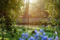 Early morning in the countryside garden with fence and sun rays. In summer royalty free stock photo