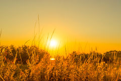 Early morning with a countryside sunrise Stock Photos