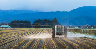 Early Morning Crop Spraying. Newly planted crop of vegetables getting a early morning spray Stock Photography