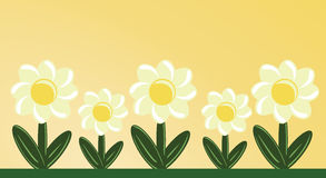 Early Morning Daisies. Wildflower daisy garden in the morning sun royalty free illustration