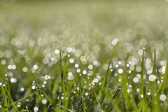 Early morning dew on grass Stock Images