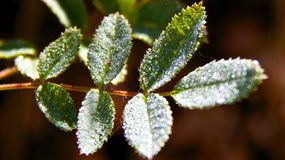 Early morning dew Royalty Free Stock Photos