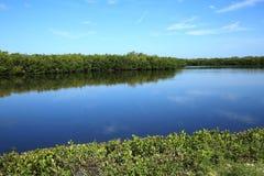 Early morning at Ding Darling on Sanibel Island, Florida, USA. Beautiful view of J.N. Ding Darling National Wildlife Refuge Lake royalty free stock photo