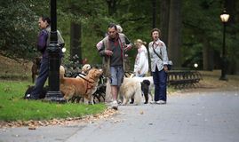 Early morning dog walkers in Central Park Royalty Free Stock Image
