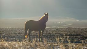 Silhouette of a horse that stands in a field at sunrise stock image