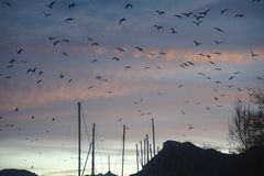A flock of seagulls flying over the marina stock photo