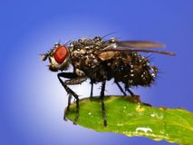 Early morning fly Stock Image