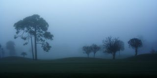 Early Morning Fog. With tree silhouettes Stock Photo