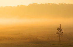 Early morning fog Stock Photography