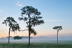 Early morning fog in Florida. Sunrise glows against the low fog across the fields with Spanish moss hanging from trees across a field along the Gulf Coast of Stock Photos