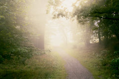 Early morning fog in forest. Peaceful path through foggy forest in the morning Stock Photos