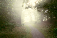 Early morning fog in forest. Peaceful path through foggy forest in the morning Royalty Free Stock Photos