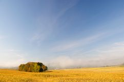 Early morning fog over a field of corn. Stock Photography