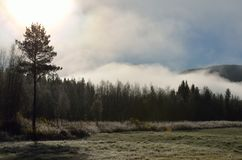 Early morning fog over field and forest royalty free stock photography