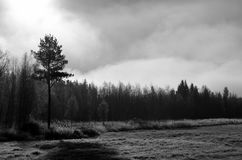 Early morning fog over field and forest stock images