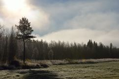 Early morning fog over field and forest royalty free stock images