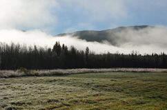 Early morning fog over field and forest stock photo