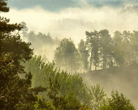 Early morning fog over the forest 1 Stock Photos