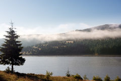 Early morning fog over the forest trees by the mountain lake. In summer Stock Images