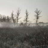Early morning fog Royalty Free Stock Images