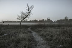 Early morning fog. Path in the early morning fog on the edge of the forest Stock Image