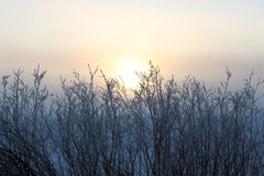 Early Morning Fog. This is a photograph of an early morning fog at Bear Lake, Utah Royalty Free Stock Images