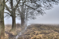 Early morning fog and trees Royalty Free Stock Image