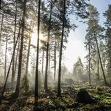Early morning in foggy forest landscape. stock photo