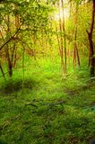 Early morning forest Stock Photos