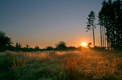 Early morning in forest. With sunrise and wet grass Stock Images