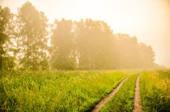 Early morning. forest hiding in the fog. forest path royalty free stock photos