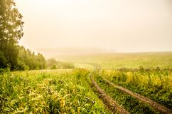 Early morning. forest hiding in the fog. forest path royalty free stock images