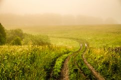 Early morning. forest hiding in the fog. forest path stock photo