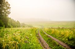 Early morning. forest hiding in the fog. forest path stock images
