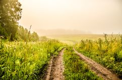 Early morning. forest hiding in the fog. forest path royalty free stock image