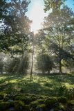 Early morning in the forest, mist and sunbeams shine beautifully through the trees,. Beautiful bright sunbeams make their way through the morning mist in fantasy royalty free stock photos