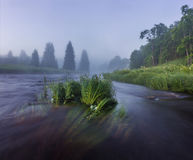 Early morning on the forest river Royalty Free Stock Photography