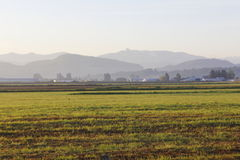 Early Morning in the Fraser Valley Royalty Free Stock Photography
