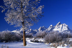 Early morning frost. In the Tetons range Royalty Free Stock Photography