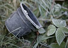 Free EARLY MORNING FROST ON PLANT POT AND BRAMBLES Stock Photography - 113480602
