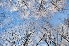 Winter Frost on trees royalty free stock image