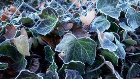 Early Morning Frost Stock Image