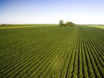 Aerial shot of agricultural soy fields Stock Image